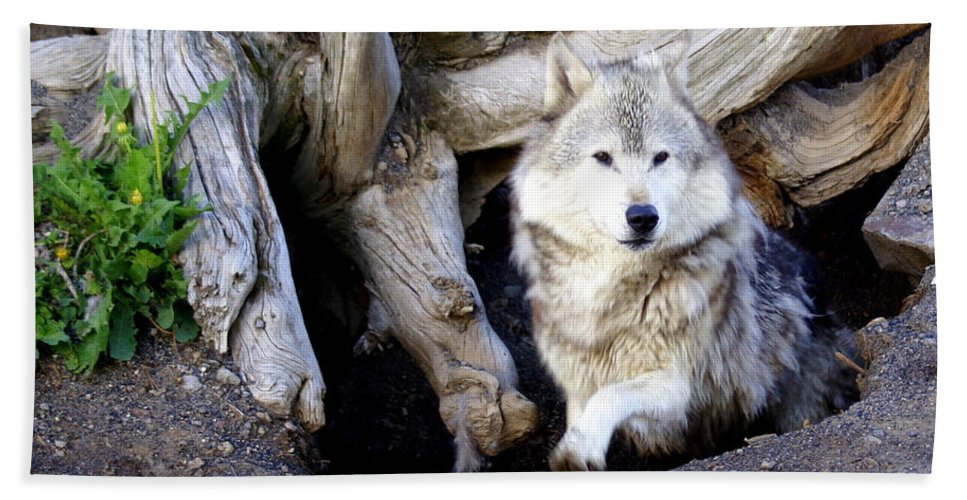 Wolf Hand Towel featuring the photograph Wolf Den 1 by Marty Koch