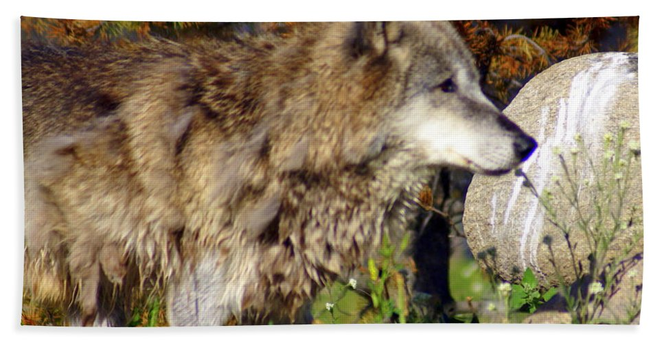 Wolf Bath Sheet featuring the photograph Wolf On Patorl by Marty Koch