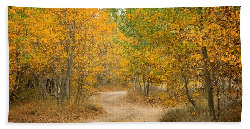 Fall Bath Towel featuring the photograph Wonder Filled Path by Lynn Bauer