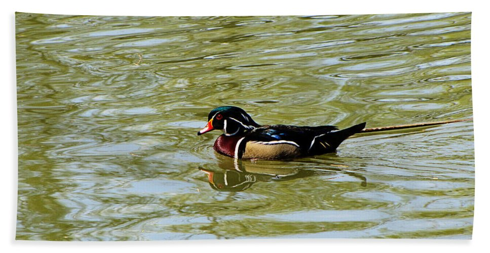 Wood Duck Hand Towel featuring the photograph Wood Duck by September Stone