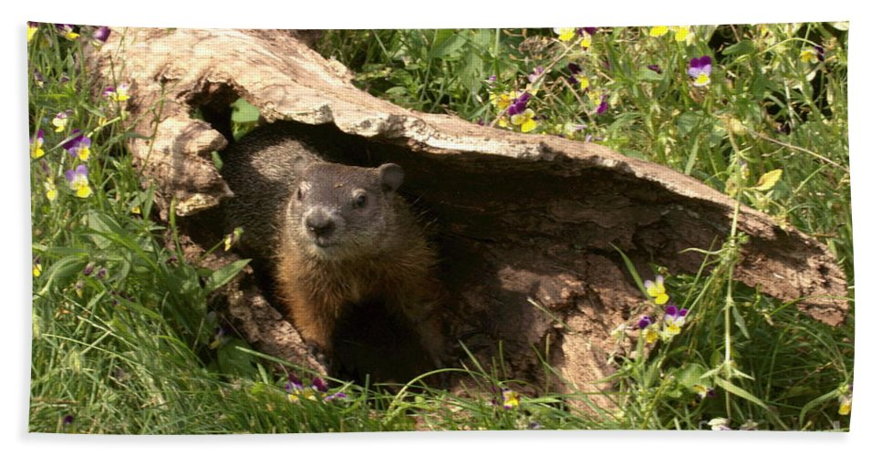 Wildlife Hand Towel featuring the photograph Woodchuck Ready For Spring by Myrna Bradshaw