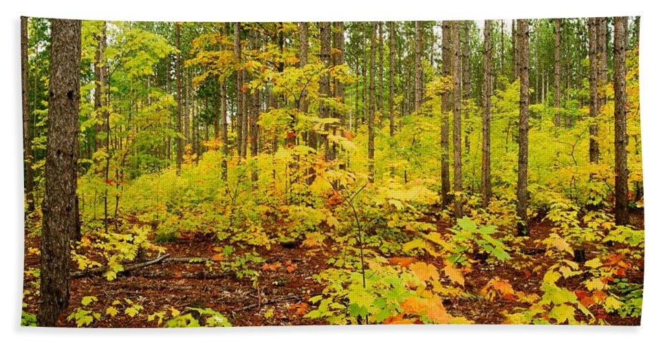 Woods Hand Towel featuring the photograph Woodland Panorama by Michael Peychich
