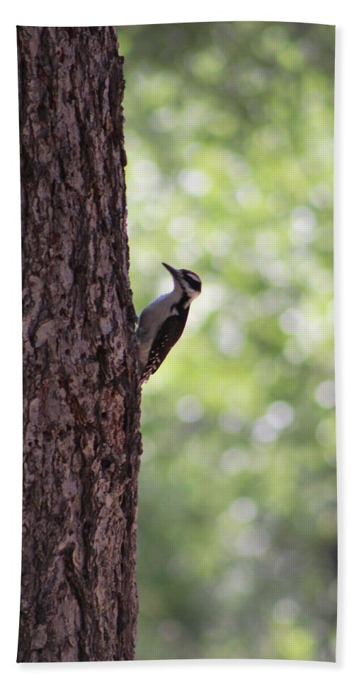 Red Headed Woodpecker Bath Sheet featuring the photograph Woodpecker In New Mexico by Colleen Cornelius