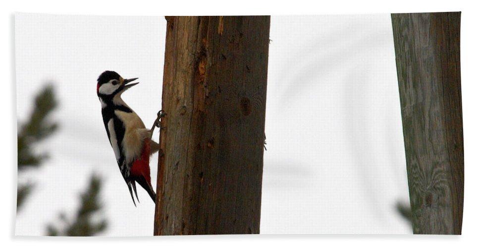Lehtokukka Bath Towel featuring the photograph Woodpecker Workshop by Jouko Lehto