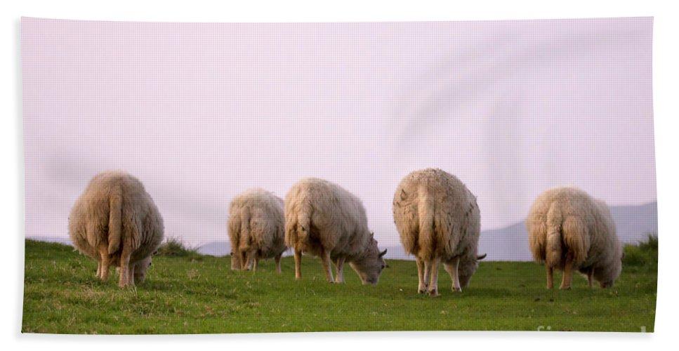 Sheep Bath Sheet featuring the photograph Wooly Bottoms by Angel Ciesniarska