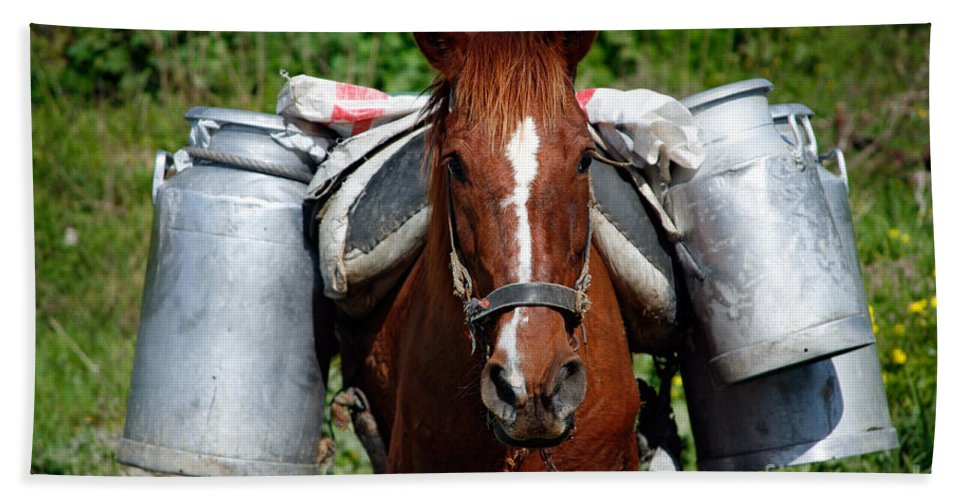 Countryside Bath Sheet featuring the photograph Work Horse At The Azores by Gaspar Avila