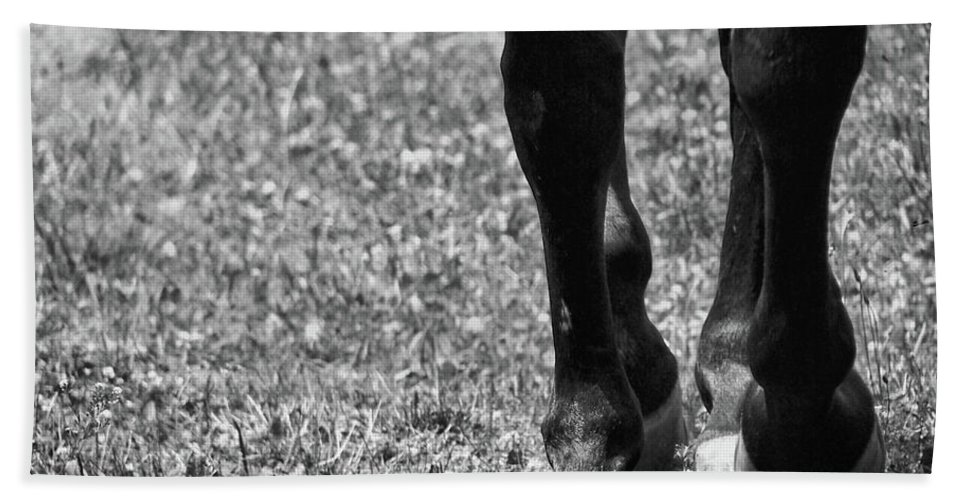Horse Bath Sheet featuring the photograph Working Trot by JAMART Photography