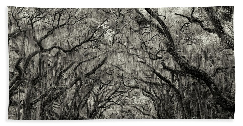 Plantation Hand Towel featuring the photograph Wormesloe Historic Site by Linda D Lester