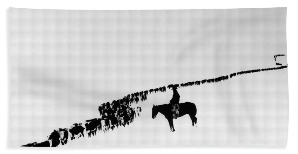 1920 Bath Sheet featuring the photograph Wyoming: Cattle, C1920 by Granger