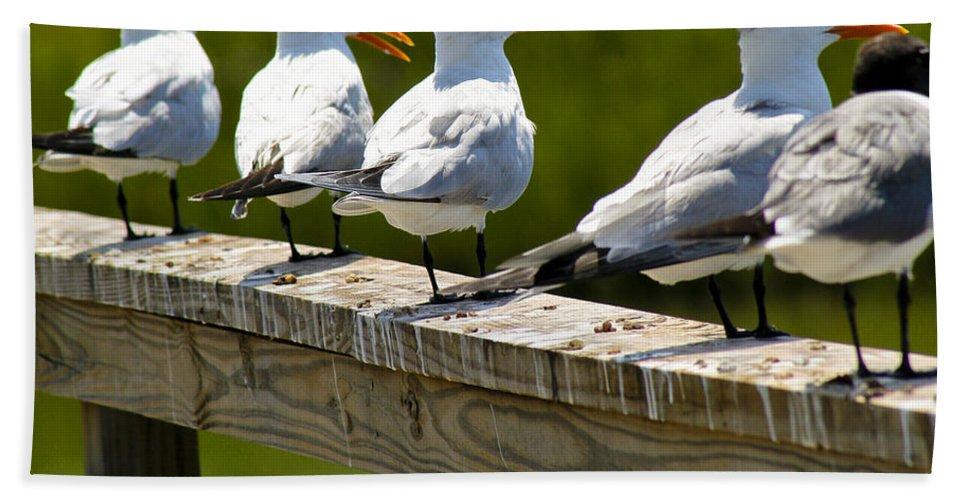 Bird Bath Sheet featuring the photograph Yackety Yackety by Marilyn Hunt
