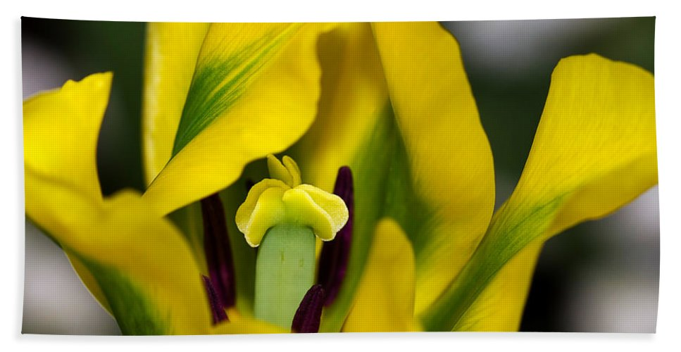 Flower Hand Towel featuring the photograph Yellow And Green Tulip by Louise Heusinkveld
