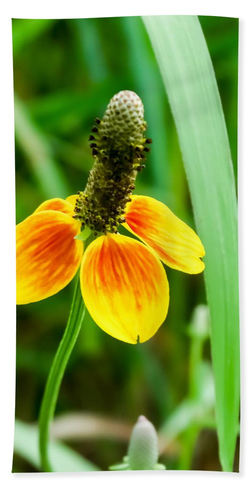 Yellow And Orange Clasping Coneflower Hand Towel featuring the photograph Yellow And Orange Clasping Coneflower by Cynthia Woods