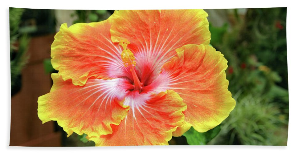 Bath Sheet featuring the photograph Yellow And Orange Hibiscus 2 by Kevin Mcenerney