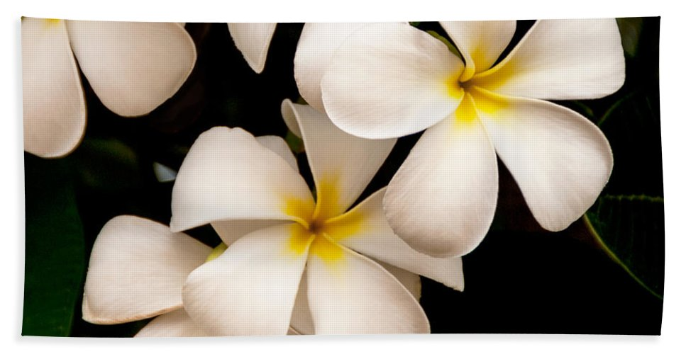 Yellow And White Plumeria Flower Frangipani Hand Towel featuring the photograph Yellow And White Plumeria by Brian Harig