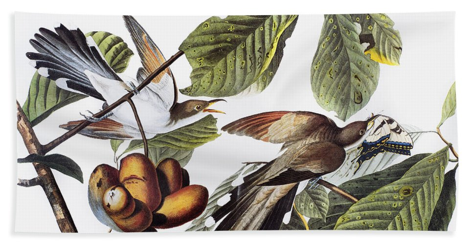 1827 Hand Towel featuring the photograph Yellow-billed Cuckoo by Granger