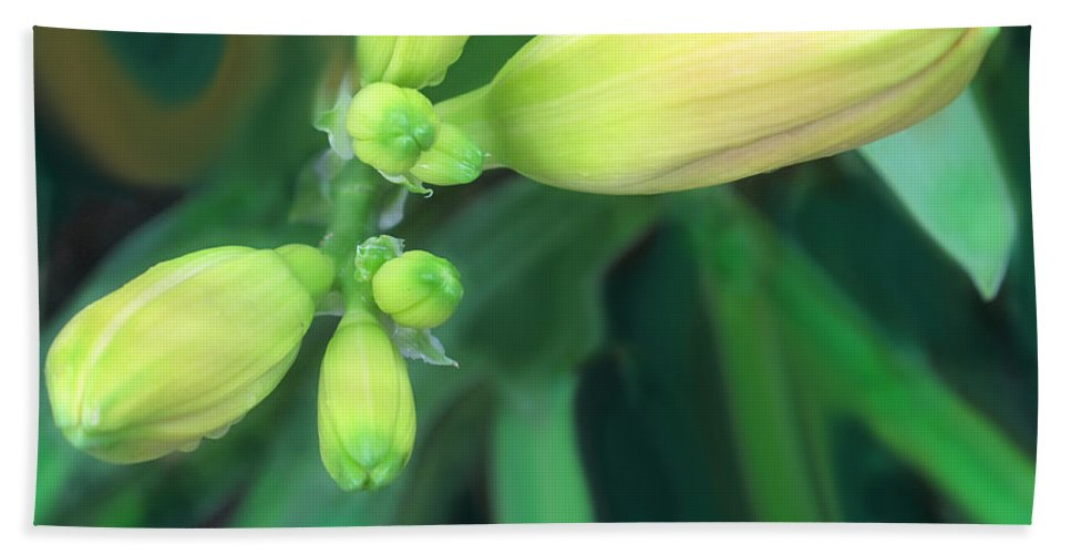 Yellow Hand Towel featuring the photograph Yellow Buds by Ian MacDonald
