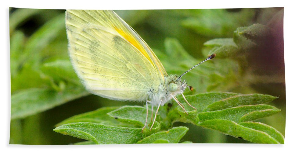Yellow Bath Sheet featuring the photograph Yellow Butterfly by James Smullins