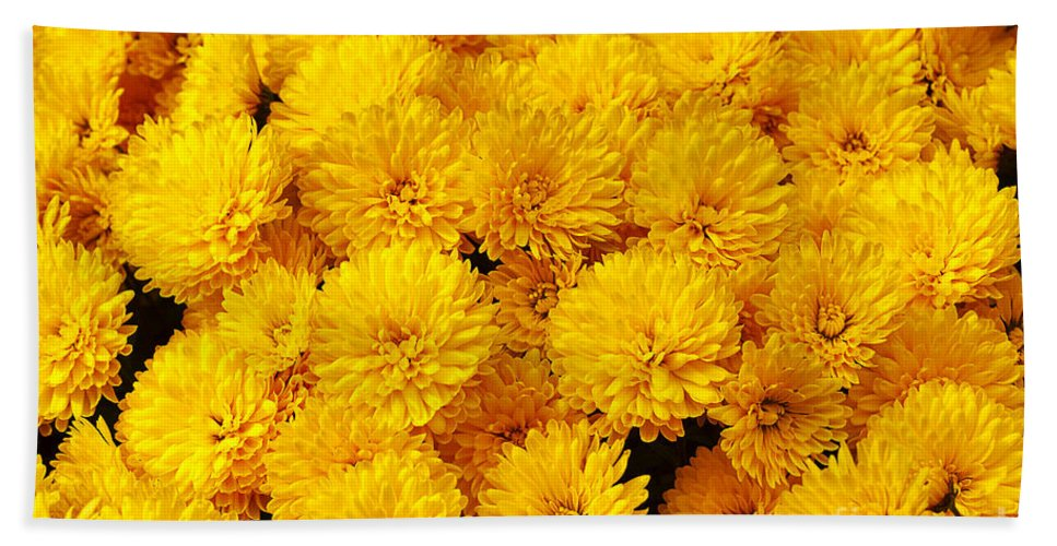 Flower Hand Towel featuring the photograph Yellow Chrysanthemums by Louise Heusinkveld