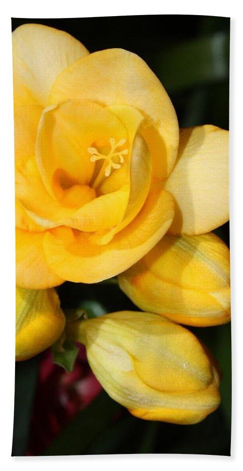 Easter Bath Sheet featuring the photograph Yellow Crocus Closeup by Carol Groenen