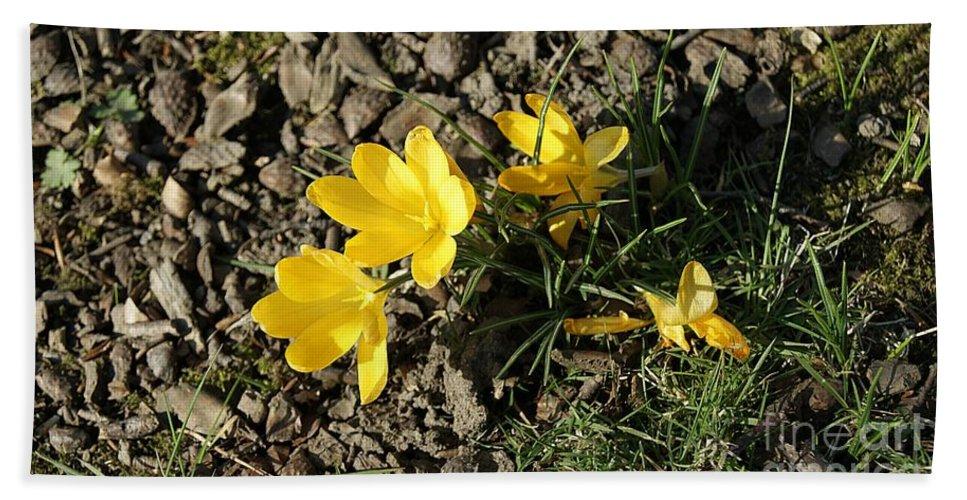 Spring Crocus Bath Sheet featuring the photograph Yellow Crocus by LDS Dya