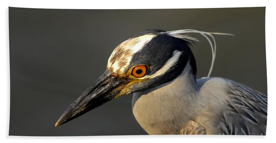 Yellow Crowned Night Heron Hand Towel featuring the photograph Yellow Crowned Night Heron by David Lee Thompson