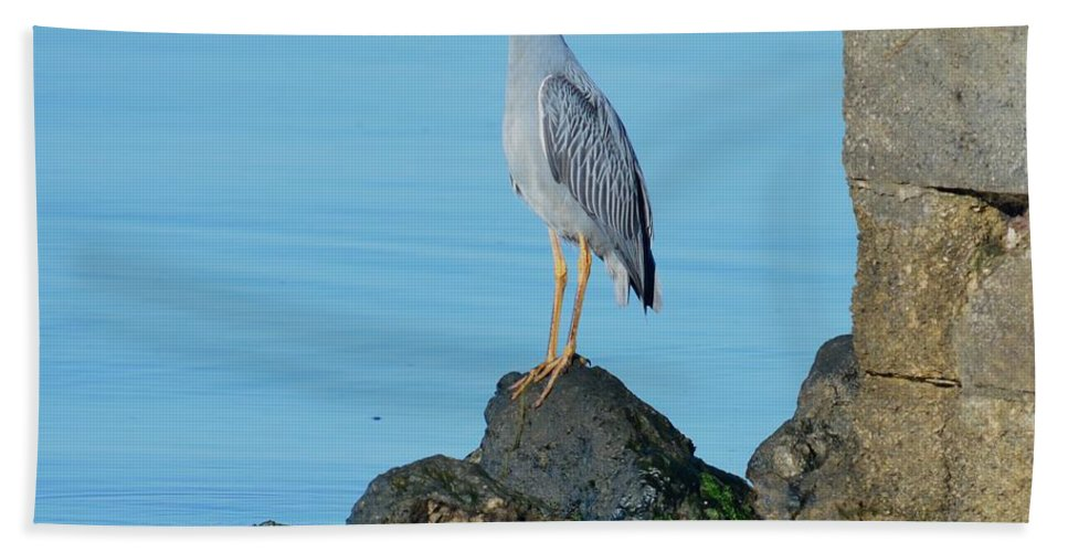 Yellow Crowned Night Heron Hand Towel featuring the photograph Yellow Crowned Night Heron Rocking It Out by Patricia Twardzik