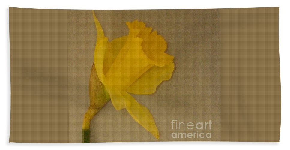 Daffodil Hand Towel featuring the photograph Yellow Daffodil by Faith Harron Boudreau
