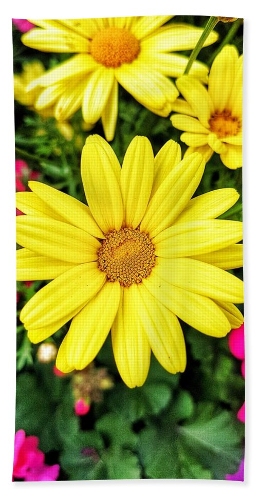 Yellow Hand Towel featuring the photograph Yellow Daisies by Nadia Seme