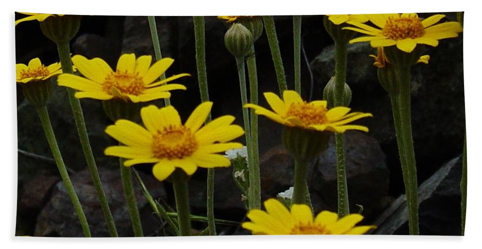 Yellow Hand Towel featuring the photograph Yellow Daisies by Sara Stevenson