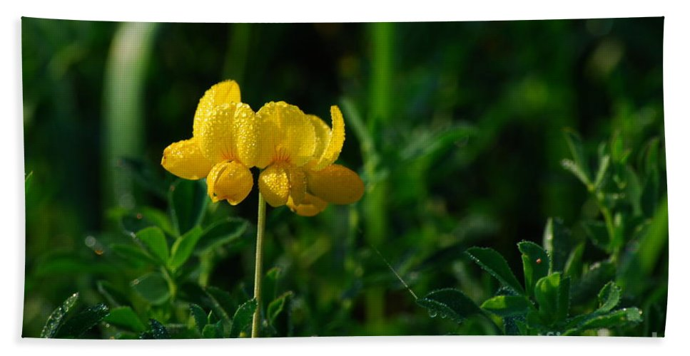 Birds Foot Trefoil Bath Sheet featuring the photograph Yellow Dew Drops by Michelle Hastings