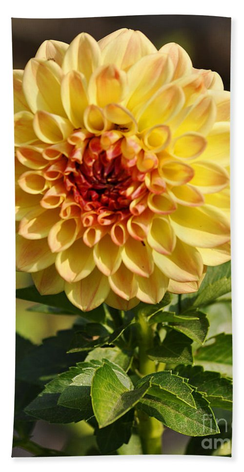 Clay Hand Towel featuring the photograph Yellow Flora by Clayton Bruster