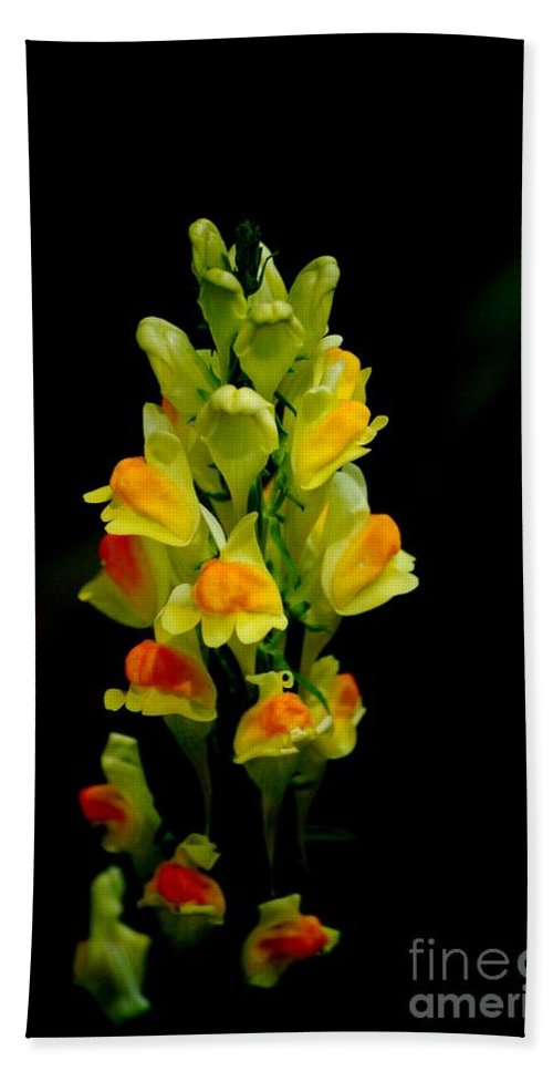 Digital Photograph Bath Towel featuring the photograph Yellow Floral 7-24-09 by David Lane