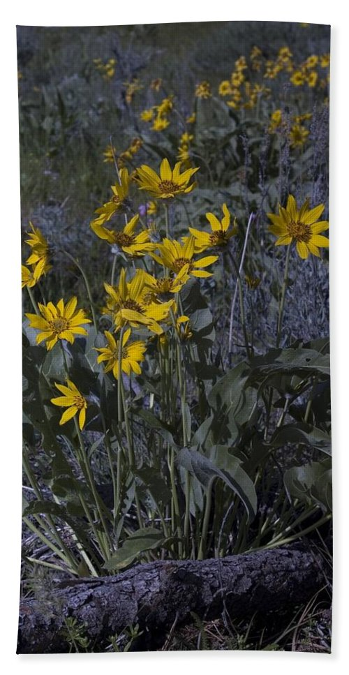 Yellow Flowesr Hand Towel featuring the photograph Yellow Flowers by Sara Stevenson