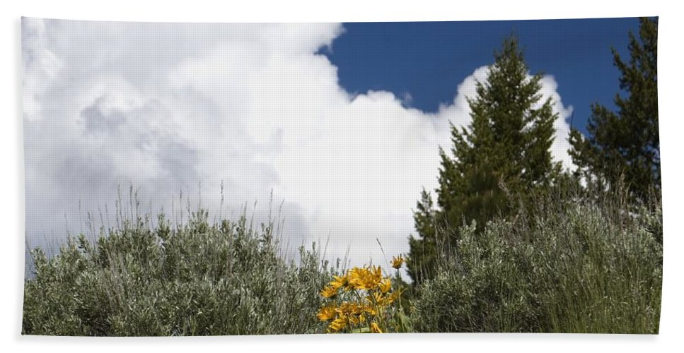 Clouds Bath Sheet featuring the photograph Yellow Flowers White Cloud by Sara Stevenson