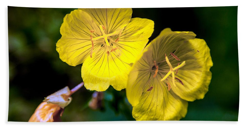 Flower Hand Towel featuring the photograph Yellow Is Gold Among The Flowers by John Haldane