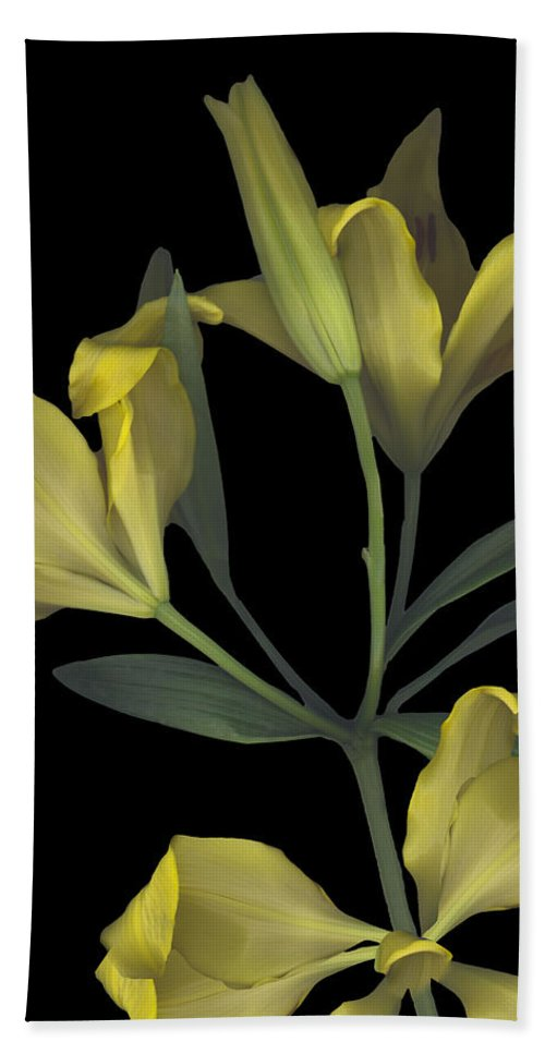Tiger Lily Lilly Yellow Flower Plant Stem Leaf Leaves Petal Bow Bouquet Black Green Happy Bright Floral Gift Bath Sheet featuring the photograph Yellow Lily On Black by Heather Kirk
