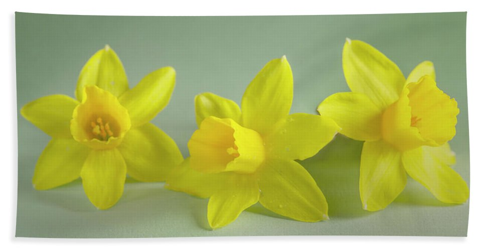 Yellow Mini Narcissus Bath Towel featuring the photograph Yellow Mini Narcissus by Iris Richardson