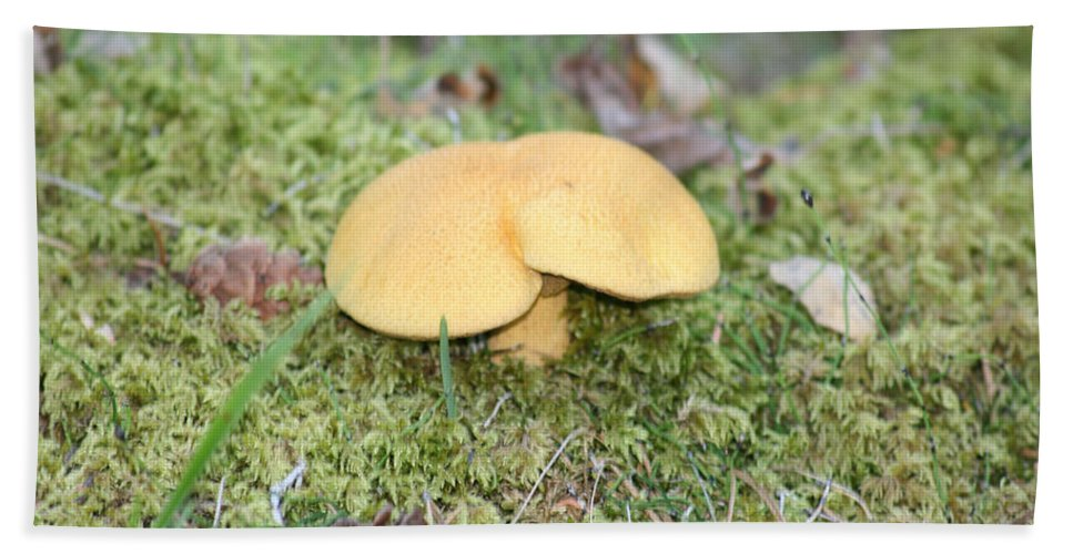 Mushrooms Nature Plants Wild Moss Acorns Forest Hand Towel featuring the photograph Yellow Mushroom by Andrea Lawrence