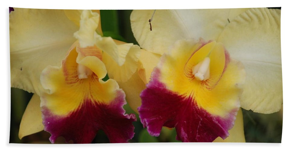 Macro Bath Towel featuring the photograph Yellow Purple Orchids by Rob Hans