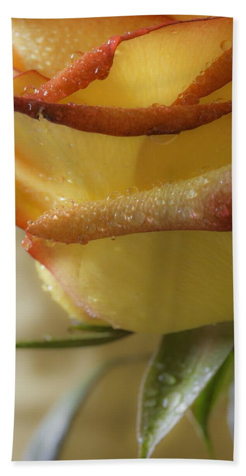 Rose Hand Towel featuring the photograph Yellow - Red Rose by Billy Bateman