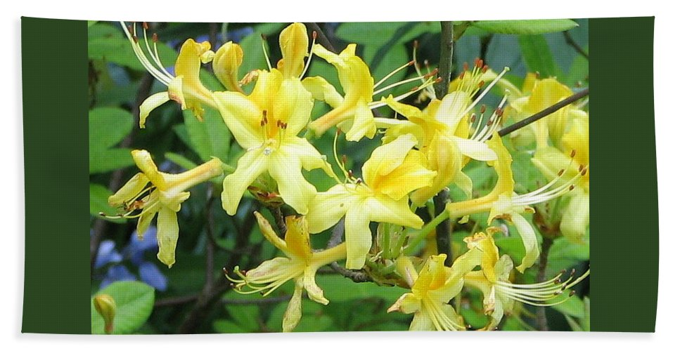 Yellow Bath Sheet featuring the photograph Yellow Rhododendron by Carla Parris