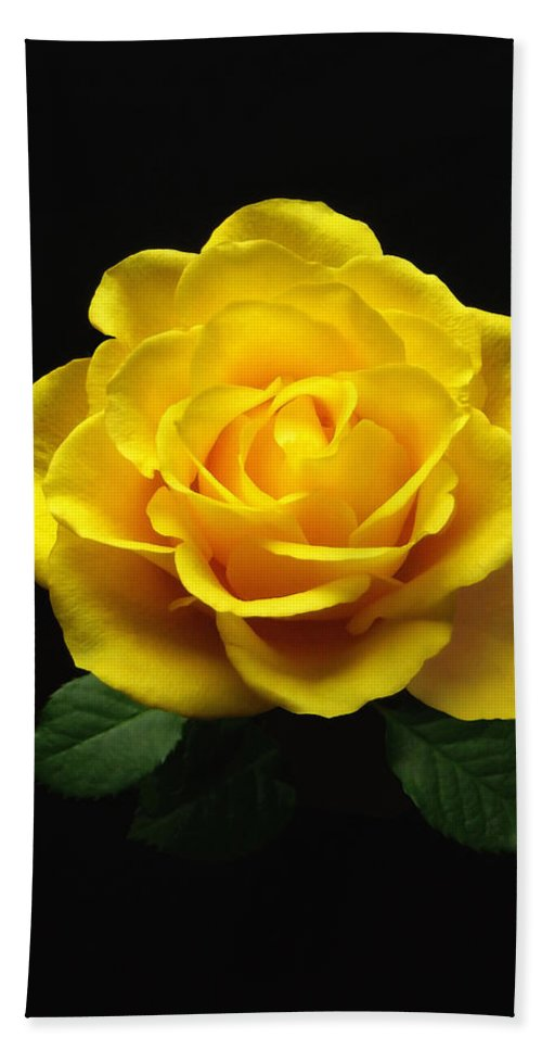 Rose Hand Towel featuring the photograph Yellow Rose 6 by Johanna Hurmerinta
