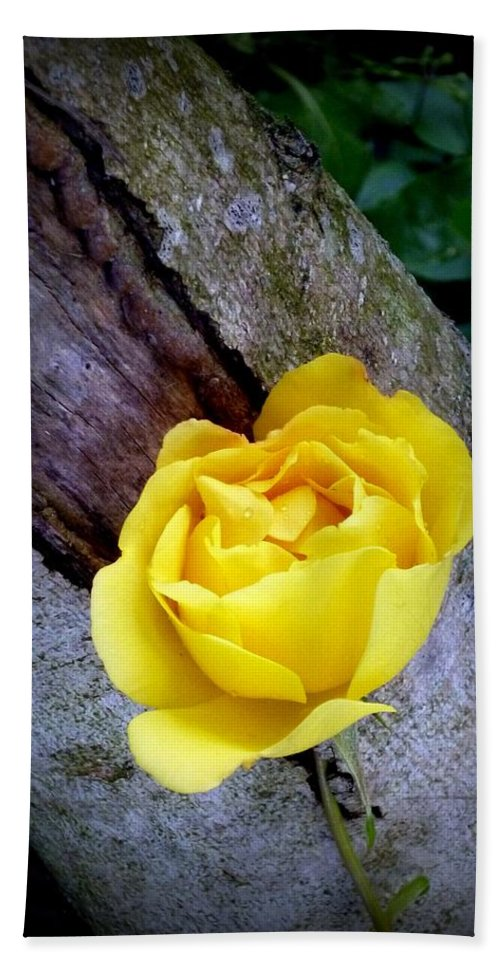 Rose Hand Towel featuring the photograph Yellow Rose by Dianne Pettingell