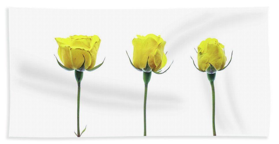 Flower Bath Sheet featuring the photograph Yellow Roses by Kelly Merlini