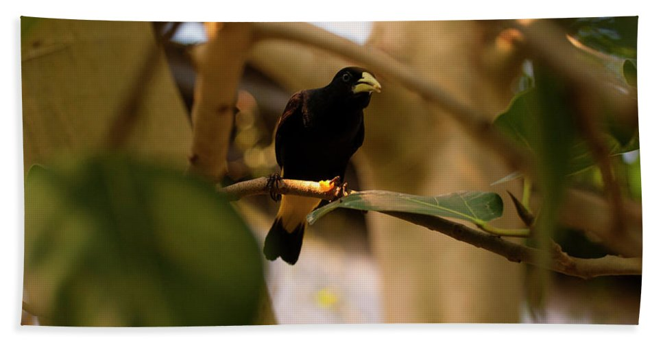 Yellow-rumped Cacique Bath Sheet featuring the photograph Yellow-rumped Cacique 3 by Chris Flees