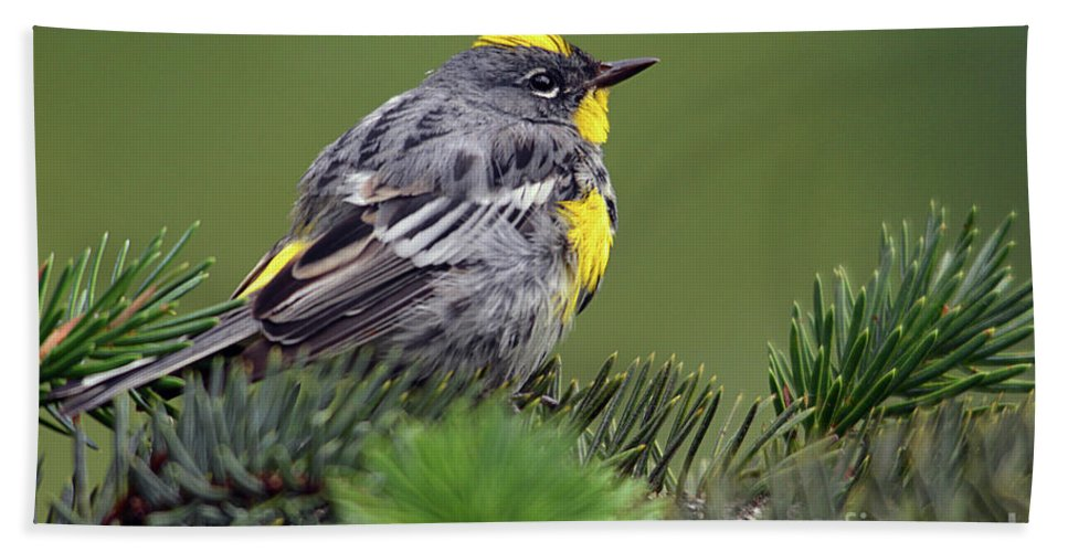 Deanna Cagle Hand Towel featuring the photograph Yellow-rumped Warbler by Deanna Cagle