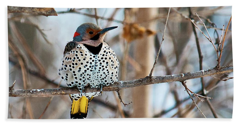 Yellow Shafted Northern Flicker Hand Towel featuring the photograph Yellow-shafted Northern Flicker Staying Warm by Edward Peterson