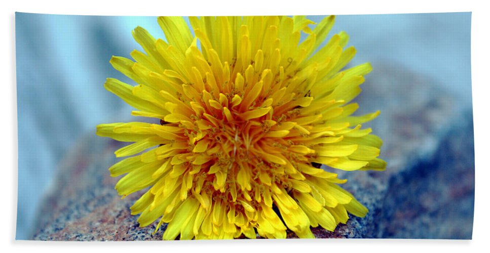 Flower Wild Nature Yellow Rock Blue Spring Macro Close Up Bath Towel featuring the photograph Yellow Spring by Linda Sannuti