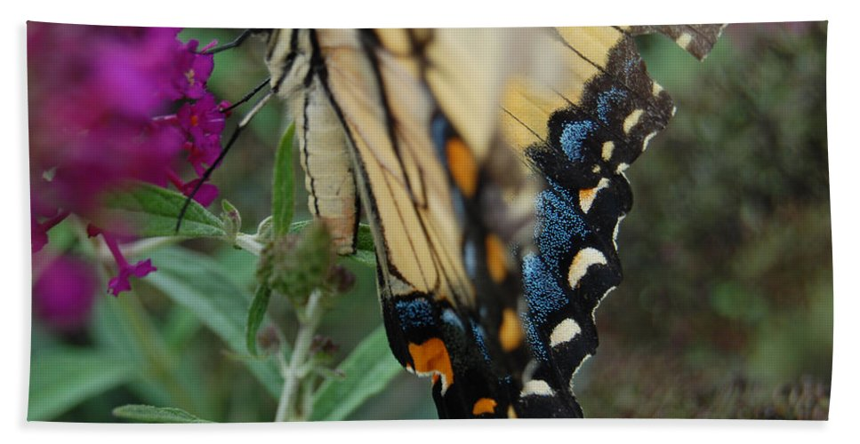 Butterfly. Yellow Bath Towel featuring the photograph Yellow Swallow by Robert Meanor