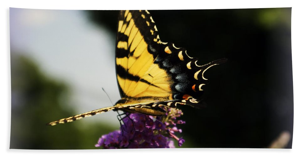 Butterfly Bath Sheet featuring the photograph Yellow Touch by Scott Wyatt